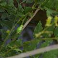 Photos: カエルをそっと撮影