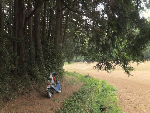森の外側の道