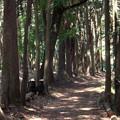 Photos: 森の道