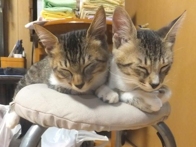 写真: 猫の俳句