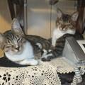 家で待ってた猫たち