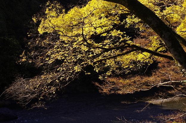 奥多摩の秋