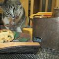 Photos: 猫が南天の葉をかむ
