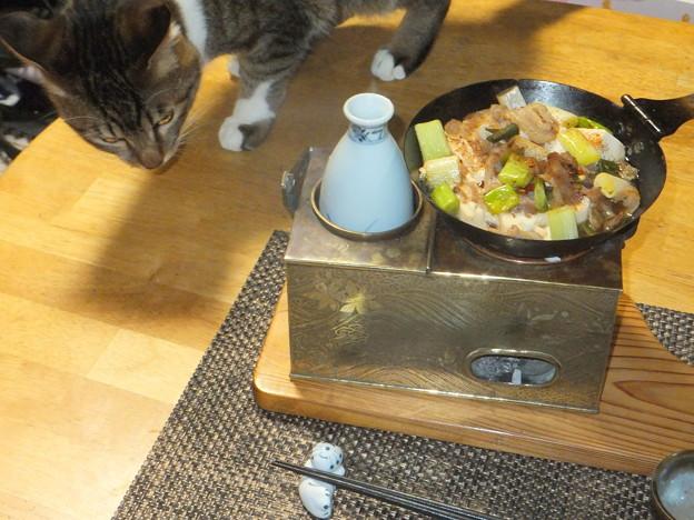 肉豆腐とコゾ