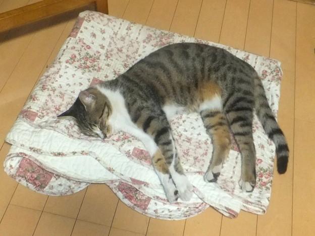 コゾ寝てる