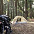 キャンプの日