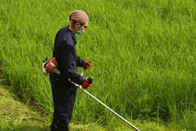 18歳草刈に参加