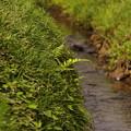小川流れる岸辺