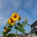 Photos: 夏ですなあ