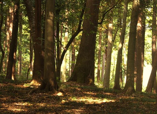 森に太陽の光が差し込んでいる