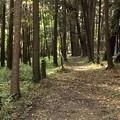 森の中に現れた古道