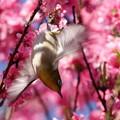 写真: 羽ばたき