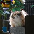 Photos: お墓・・・花もあるし好きです。