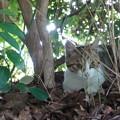 Photos: 子猫♂