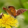 Photos: ハチさんと仲良く