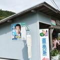 Photos: グリーンマートつげの(黄柳野)