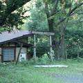 Photos: 幡教寺跡
