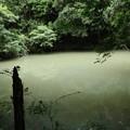 磐田市雨垂(うたり)の森旧農業用ため池