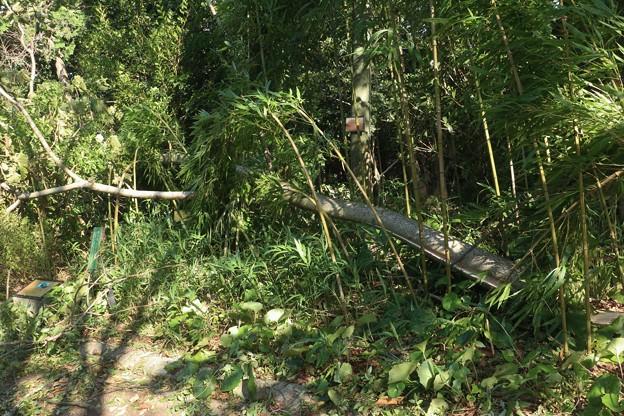 台風24号爪痕万葉の森公園