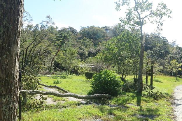 森林公園台風24号の爪痕