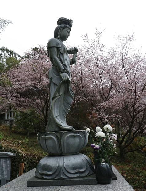 観音様と四季桜