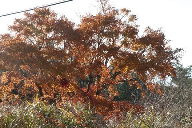 富幕山の紅葉