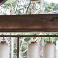 遠州袋井の名工 「鈴木八郎」作 未完成の昇り竜と降り竜を結ぶ「梁、はり」