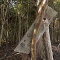 Photos: 富幕山の稚児塚、昔あったこの看板は今は有りません・・