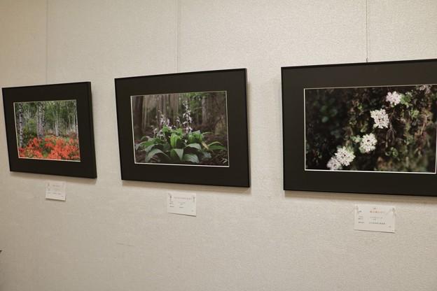 マインシュロス・ギャラリー写真展2月5日(火)から2月10日(日)