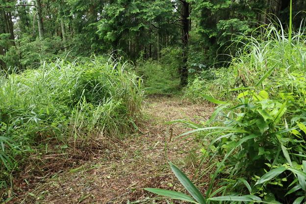 K)さんが材木搬出道に通じる道のササを刈って有りました。