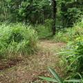Photos: K)さんが材木搬出道に通じる道のササを刈って有りました。