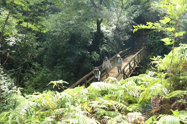森林公園ウォーク旧山友とその仲間