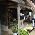 Photos: グリーンマート「つげの、黄柳野」