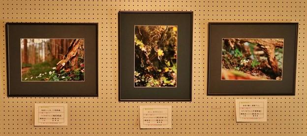 磐田赤松邸写真展