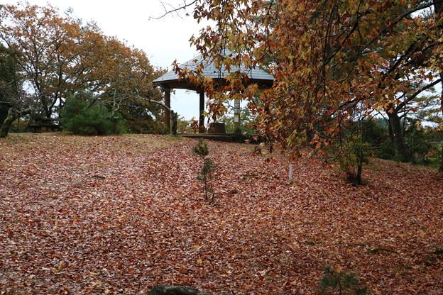 落ち葉のジュータン モミジバフウ(紅葉葉楓)マンサク科