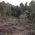 富幕山展望デッキより先週富士山が見えるよう木を切った所