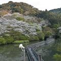 Photos: 奥山桜