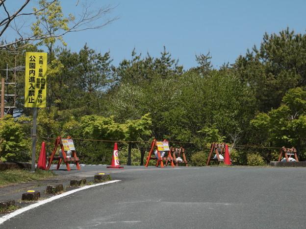 森林公園今日から駐車場閉鎖5月6日まで車で来なければ園内散歩は出来ます。中央の木白い花は咲きだした。ウワミズザクラ(上溝桜) バラ科