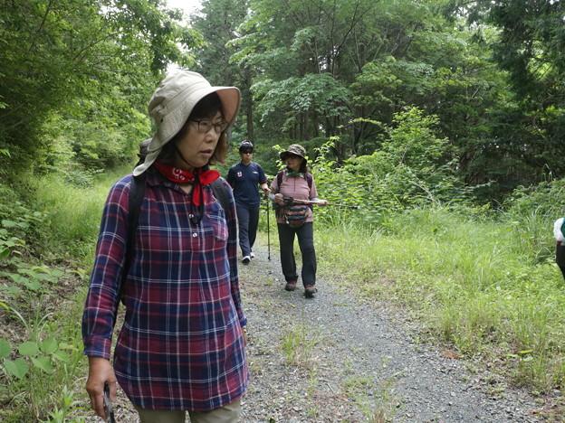 Photos: 今日2回目富幕山に長楽寺のボランテアさんとイナモリソウ見ながら登っています。