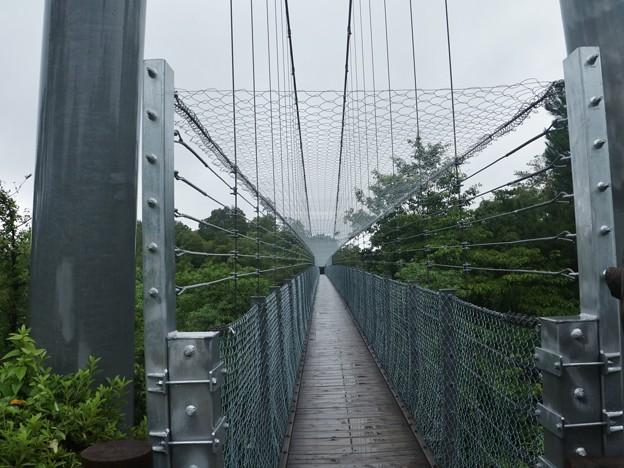 吊橋安全対策工事完了約2メートル上天井にネットを張ってあります。
