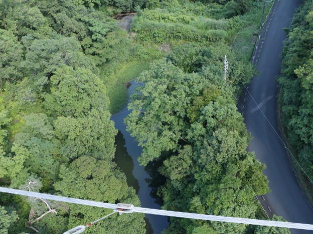浜北森林公園吊橋(空の散歩道)中央付近から下を望む