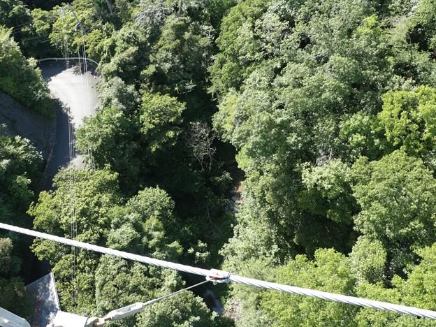 浜北森林公園吊橋(空の散歩道)吊り橋下