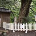 Photos: 比木、賀茂神社