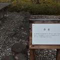 太田川ダム片吹の郷 「力石」
