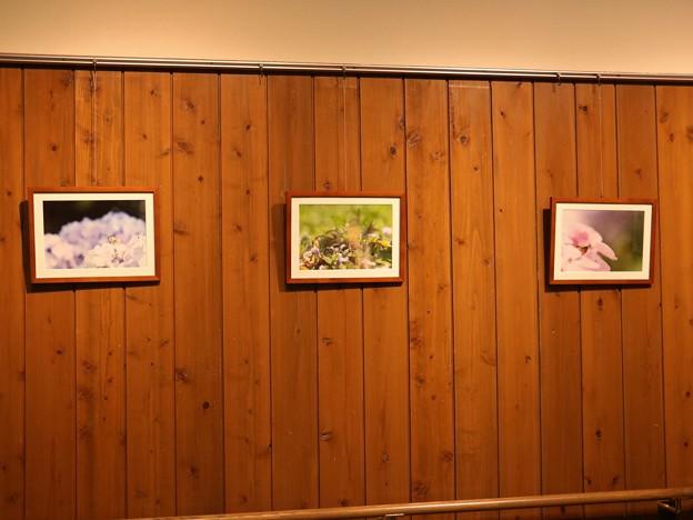 森林公園バードピアで雨かえる写真展