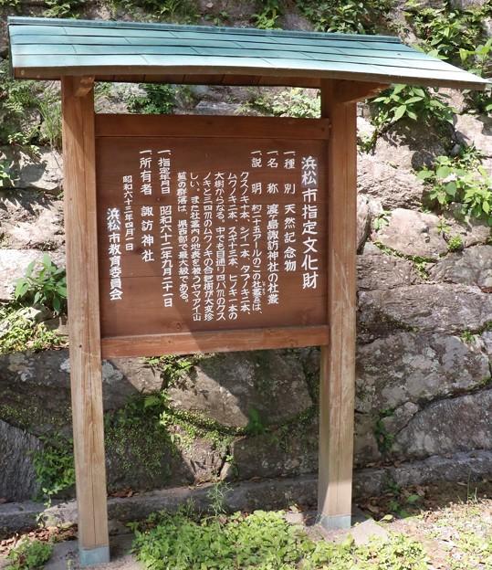 渡ヶ島諏訪神社の「社叢、しゃそう、鎮守の森」  クスノキ(樟、楠) クスノキ科