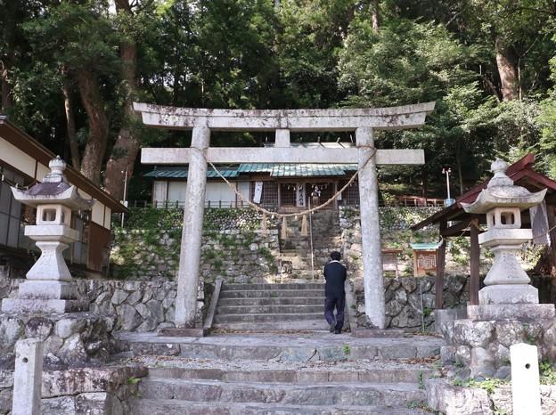渡ヶ島諏訪神社の楠の木クスノキ(樟、楠) クスノキ科