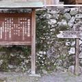 Photos: 米沢諏訪神社のイチイガシ (みなざわすわじんじゃのいちいがし)イチイガシ(一位樫) ブナ科