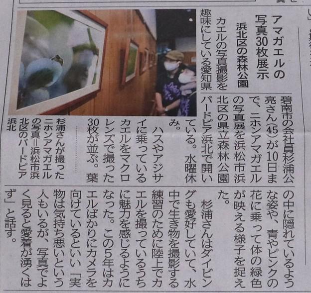 今朝の地元新聞に先日愛知県の作手長ノ山湿原(ながのやましつげん)で花写真撮っていると偶然出会った人が自分は蛙を撮っていると今度森林公園バードピアの(S)さん知人で写真展をしますからと言っていた。