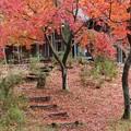 Photos: 森林公園